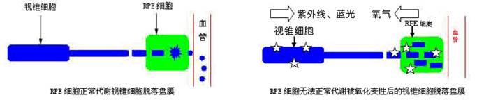 电路 电路图 电子 设计 素材 原理图 683_144